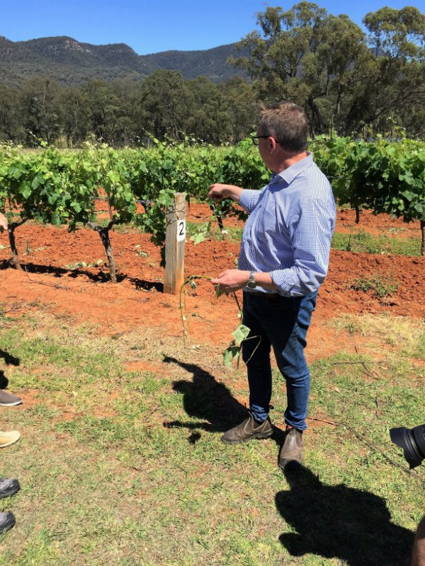 Ultimately Sydney   Hunter Valley Tours   Gourmet Food Tours Sydney   Small Group Tours Hunter Valley   Hunter Valley Winery